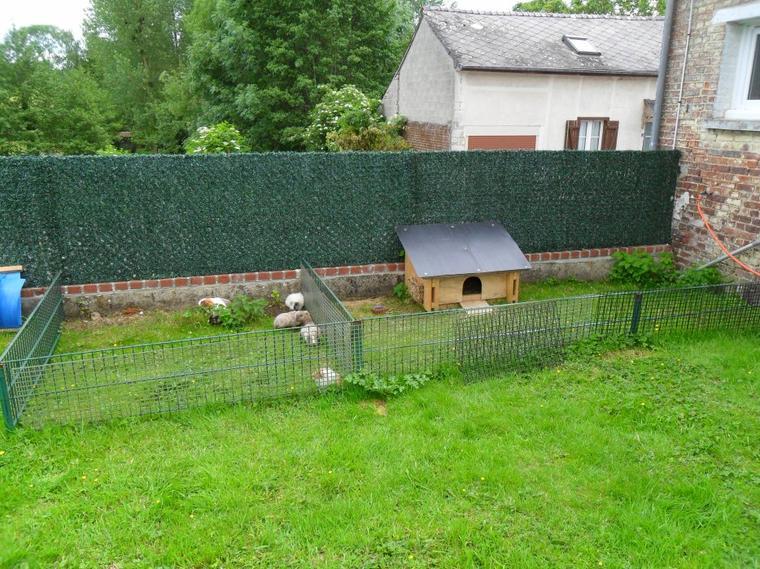 installation exterieur elevage familial de cochon d inde shelty