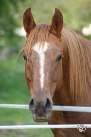 Le respect du cheval, c'est la fondation de la liberté.