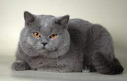 Dlaczego niekt�re diety dla kota są nieskuteczne?