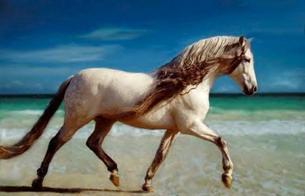 chevaux!!!