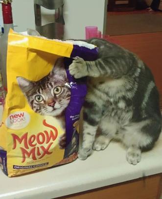 Un paquet de croquettes pour chat plus vrai que nature !
