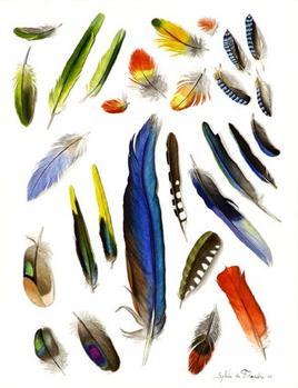 La magye des plumes kithic for Signification du noir et blanc