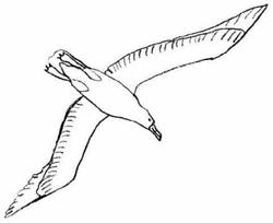 3061923329 Cesse De Te  parer Aux Blanches Colombes Tu Es Un Albatros Merci together with  on aile isi