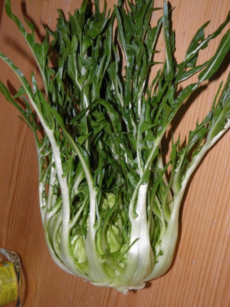 La chicor e nature gastronomique et m dicinale - Variete de salade d hiver ...