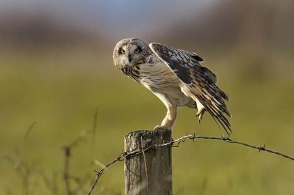 oiseau de ptit loulou le 14décembre trouvé par Martine  ?c=isi&im=%2F4307%2F79784307%2Fpics%2F3026049328_2_3_YPY1r8gi