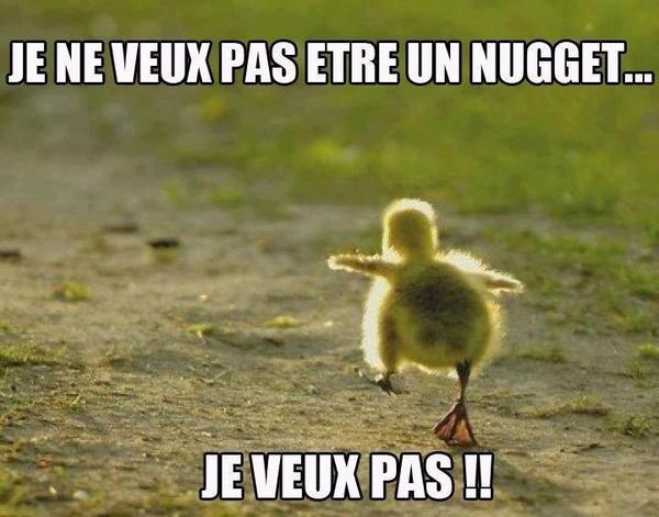 Histoire de Nugget