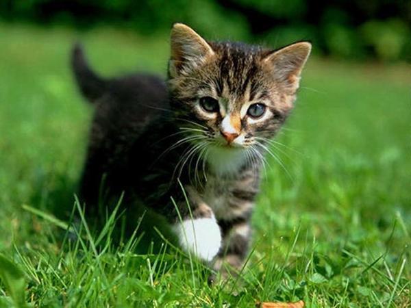 Petit chaton tout mignon - Chat tout mignon ...