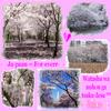 JAPON - L'empire du soleil levant d'aujourd'hui