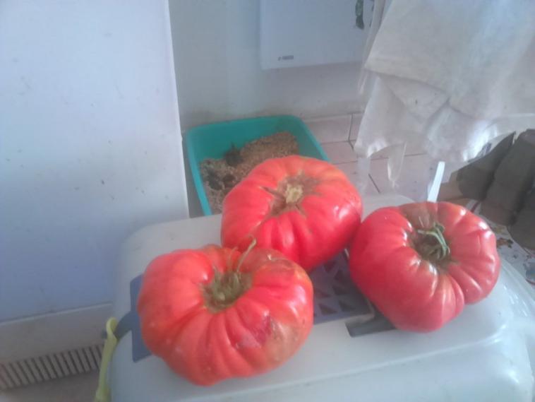 nos tomate