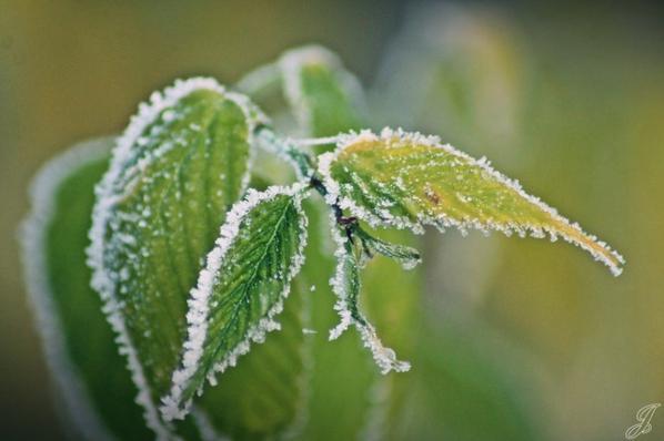Loin du froid de Décembre... ♪