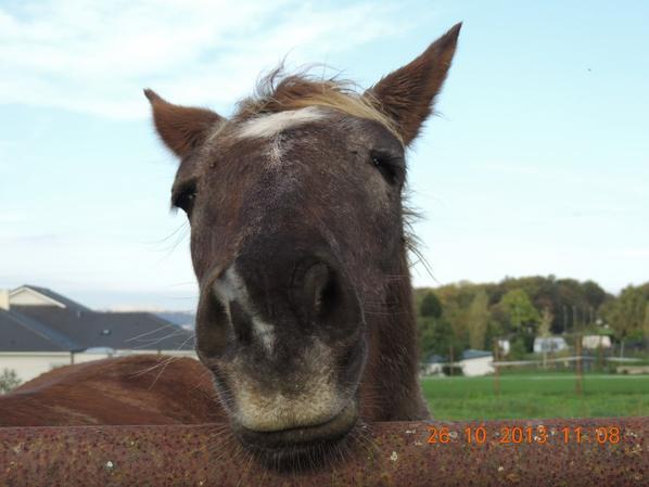 Qu'est-ce que pourrai faire les chevaux pour une pomme?