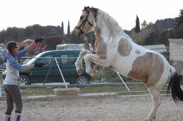 le cirque! ♥