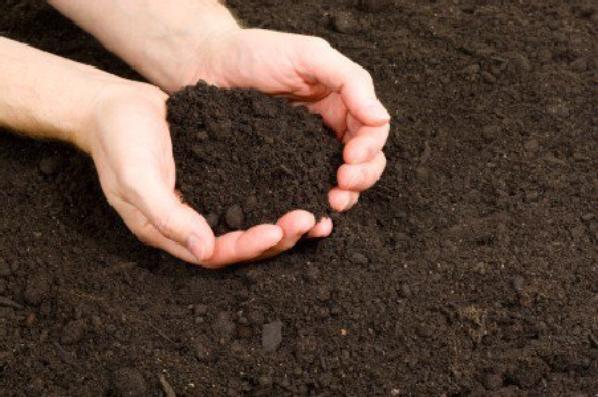 Enracinons nous a la terre pour notre stabilité