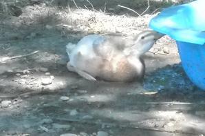Mes canards l'été dernier