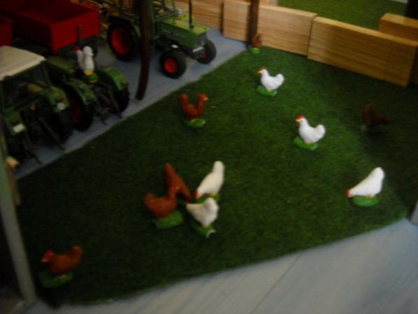 Nouveautée :  12 poules