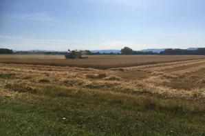 Moissons dans le Ried en Alsace