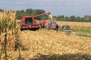 Moisson de maïs 2017