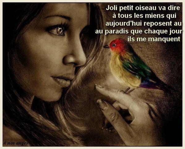 jolie petit oiseau
