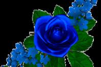 ....les roses..........✿.