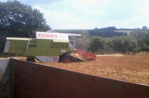 Moisson !! Moissonneuse Claas