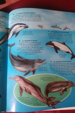 Les différents dauphins