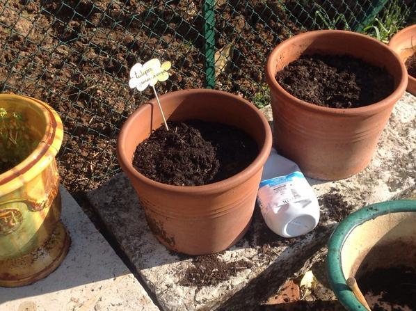 Idées décoratifs jardin