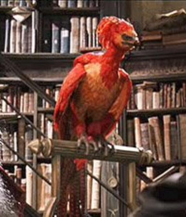 Une des nombreuses preuves de la loyauté d'Harry à Albus Dumbledore/