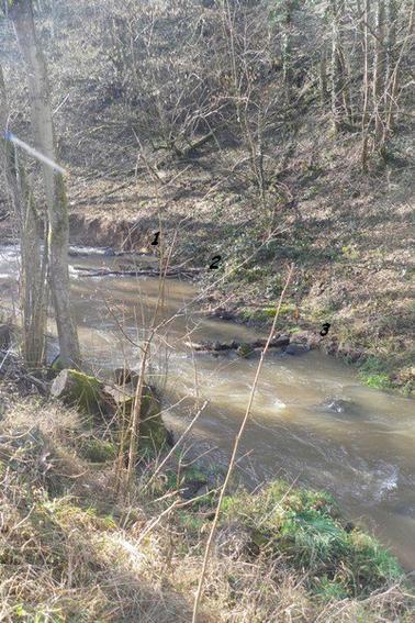 Le Cosne - Année 2013 - Amont des Vernays
