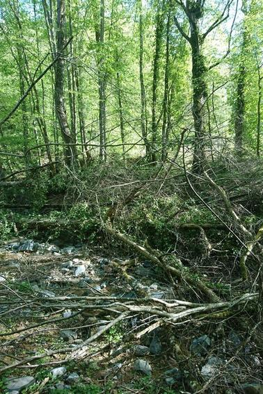 Samedi 22 Avril 2017 : nettoyage rivière