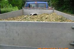 chantier d'abattage de sapin