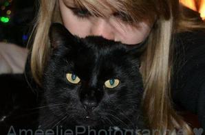 Mon amour de chat.♥♥