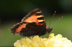 Des petits papillons.♥