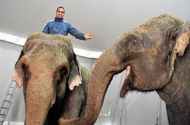 Arlette Gruss > Les éléphants