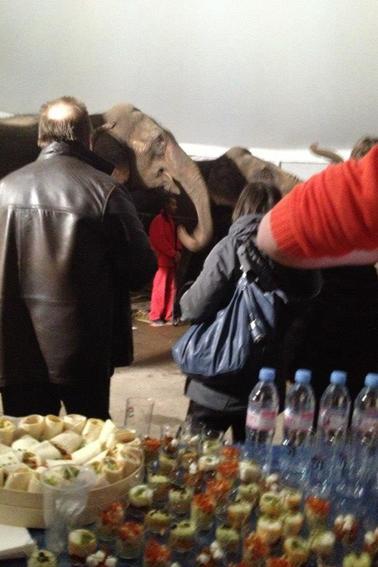 """Arlette Gruss > Nous avons partagé un """" apéro"""" avec les éléphants"""