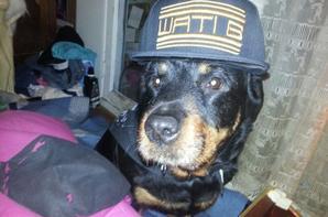 ma chienne et moi en wati b vous pense quoi !
