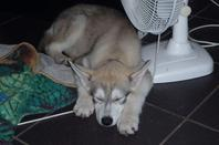 Mon husky <3 (suite )