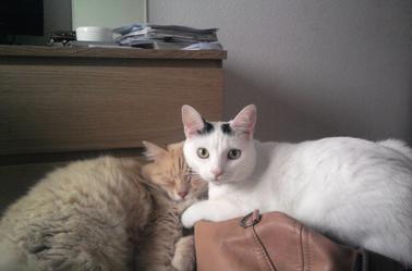 Une grande histoire d'amour entre Abba et Heliot :)