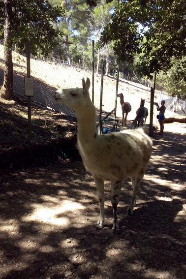 parc animalier domestique!!