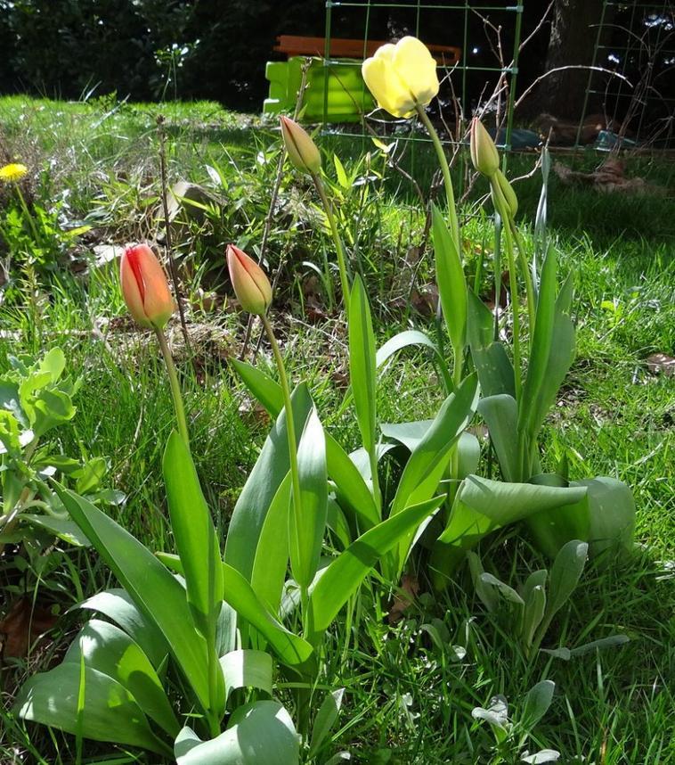 de belles couleur du jardin !!