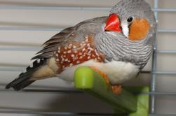 du coté des mandarins