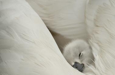 Bonne nuit a tous et toutes :* a demain ;)