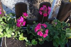 journée au jardin avec se beau soleil !!