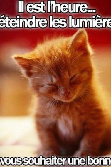 bonne nuit a tous et a toutes