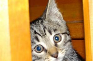 Mon petit chat trop mignon <3