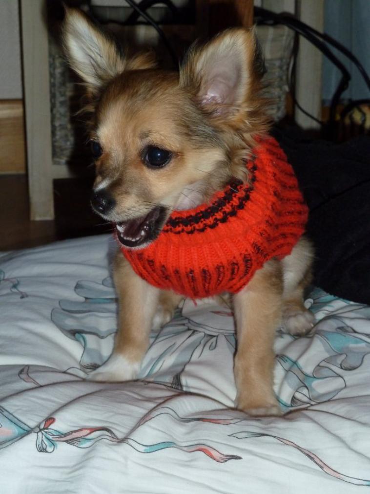 Iron avec son petit pull Rouge :)