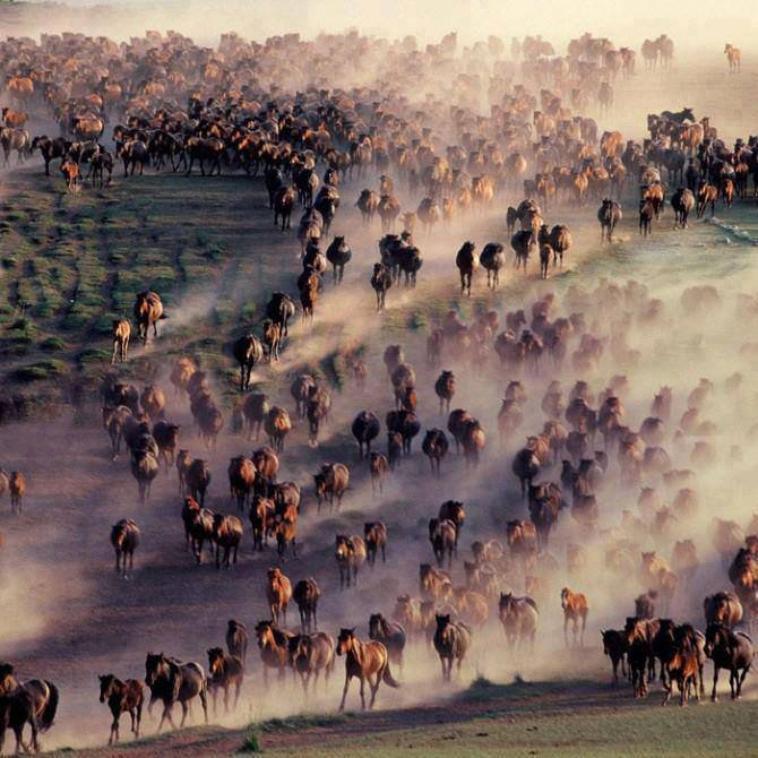 Plein plein de chevaux :)