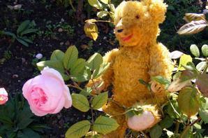 Wilfried fait connaissance avec les fleurs du jardin d'automne+++