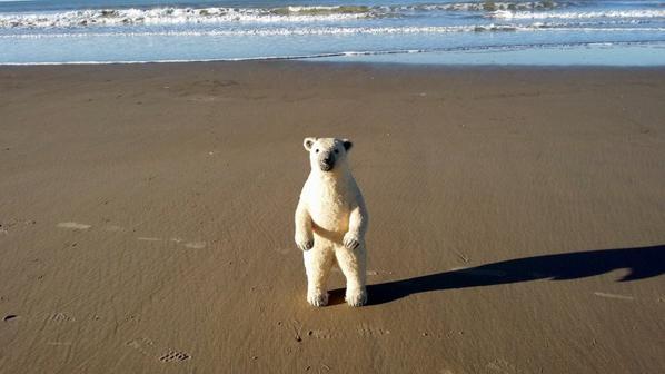 Ma trouvaille du jour  je suis ravie!après ma trouvaille nous sommes mon mari et moi  somme partis à la mer pour faire des photos+++