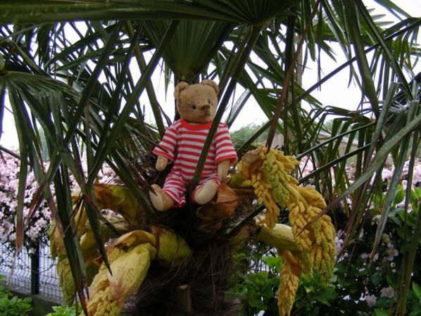 Mon Nestor dans le palmier qui fleuris++++