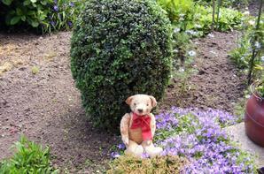 Théodor vous montre les buis du jardin tendu par mes soins,il fait beau++++